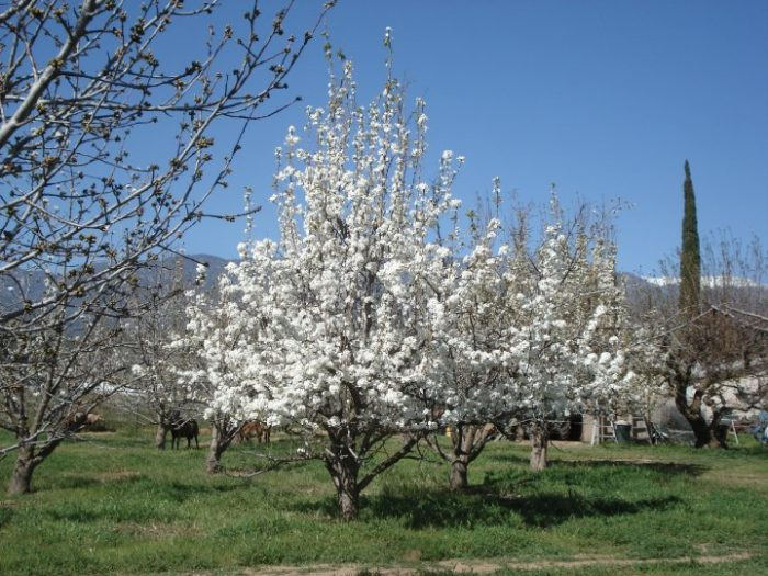 6. Providence Cherry Farm in Beaumont