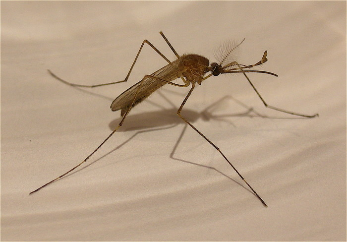 4. Mosquitoes tend to freak tourists out. Here in Alabama, we've become used to them.