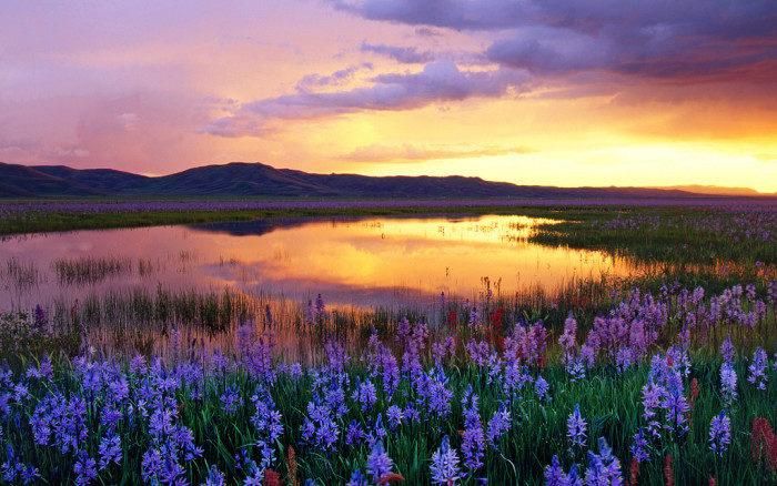Idaho: Camas Prarie