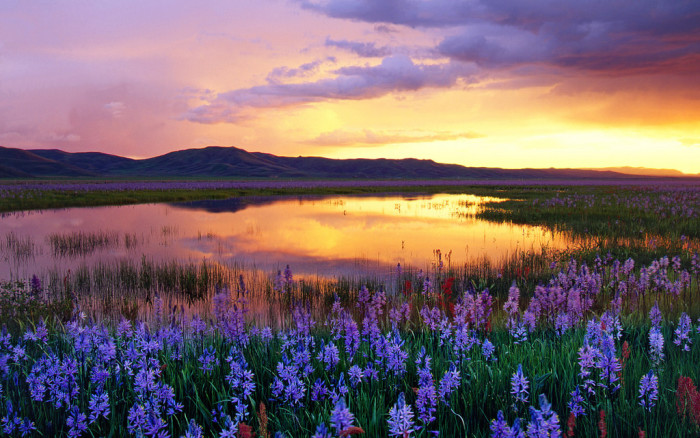 13. This sunset in Camas Prairie is accented by vivid wildflowers.