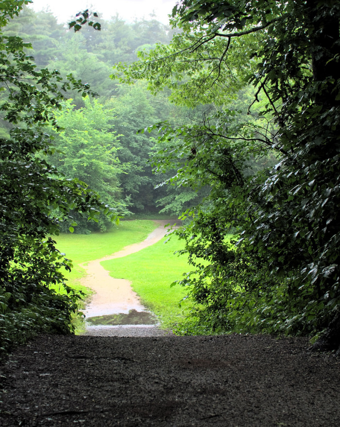 13. The Acorn Trail at Great Brook Farm State Park in Carlisle is a hidden hiking treasure. Tucked away in the dense woodlands of the state park, this narrow and winding path will take you through lovely meadows and over gentle hills.