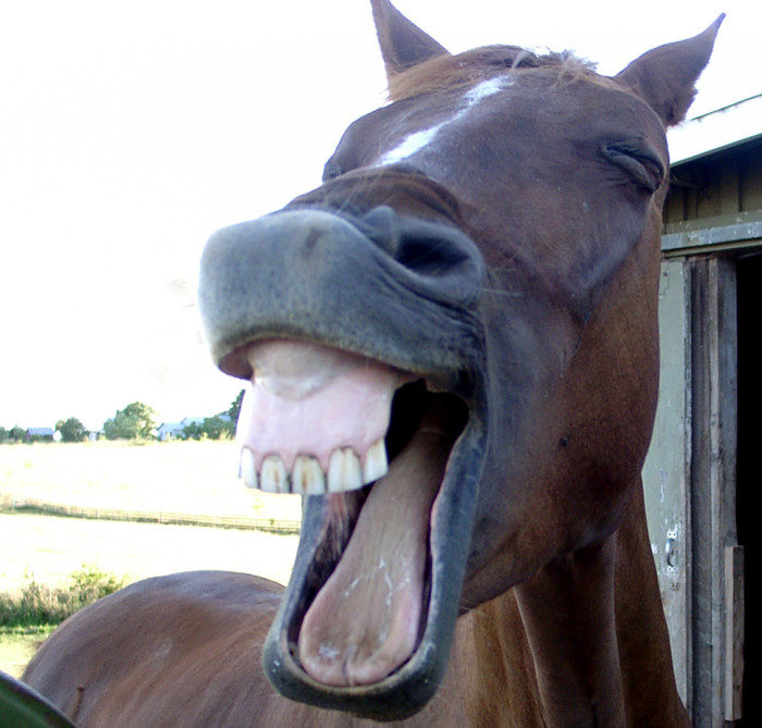 9. Stealing a horse is a crime punishable by hanging.