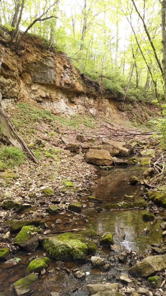 4.Snow Trillium Trail at Battle of Athens State Historic Site