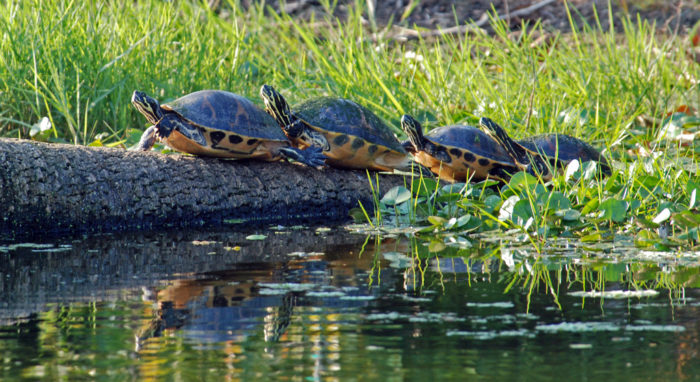5. Turtle Lake, North Dakota stays true to its name by hosting the annual United States Turtle Racing Championships.