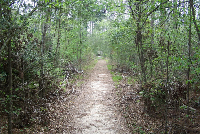 4. Big Thicket National Preserve Kirby Nature Trail, 2.5 miles (Lumberton)