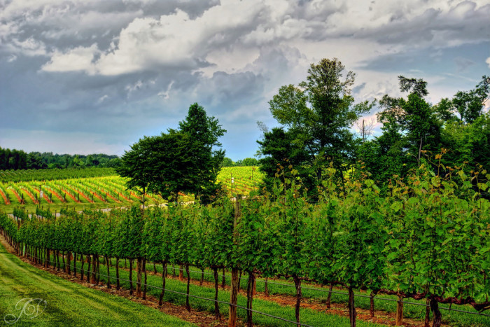 12. North Carolina has SO many beautiful vineyards and wineries. Nothing says 'romance' like some fine wine.