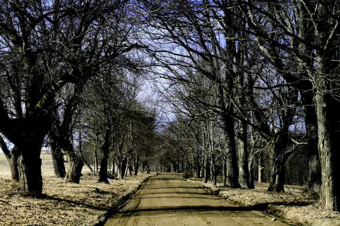 12. Even the roads are a sight to behold, which means your travels are that much better.