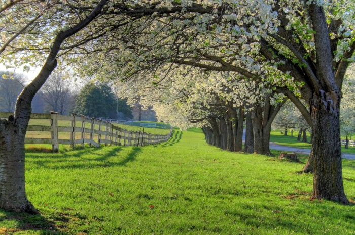 4. I can imagine two lovers in a romance film having a picnic under one of these trees.