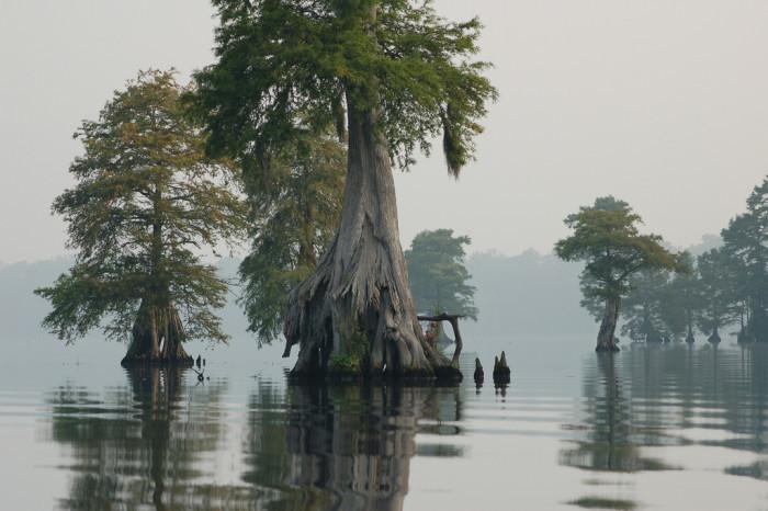 14. The Great Dismal Swamp, North Carolina