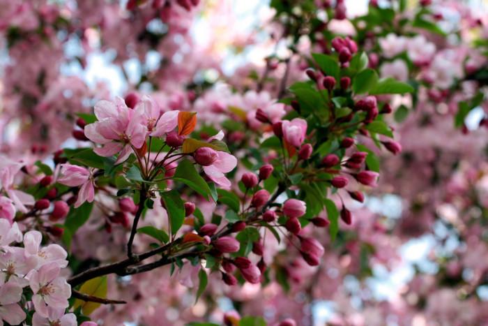 7. Spectacular Spring