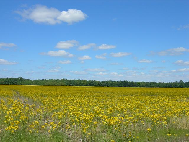 7. Our Gorgeous Rural Landscape