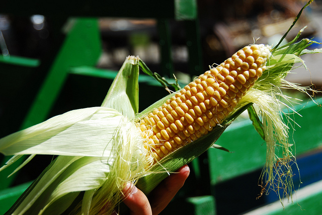 6. Buy sweet corn from a stranger in a random parking lot.