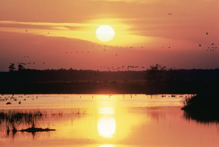 4. While photographing Blackwater National Wildlife Refuge, make sure to occasionally take your eyes away from the lens. You'll want to fully enjoy the epic sunset speckled with hundreds of migratory birds.