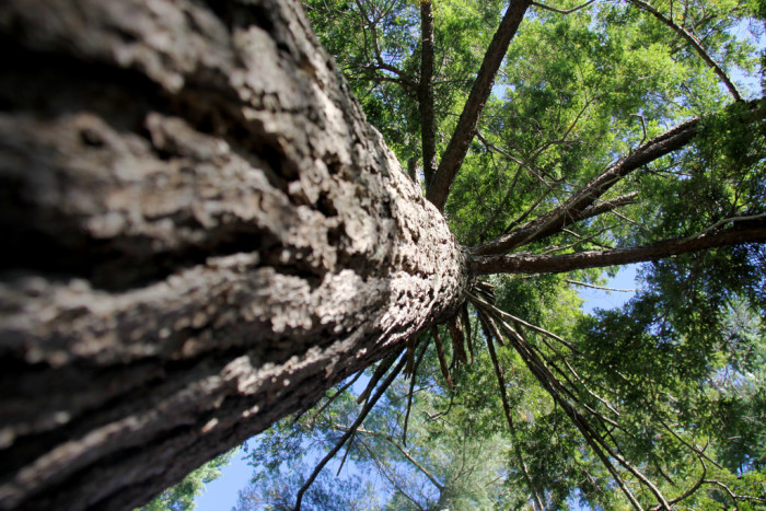 11. Take a minute away from the water at Lake Cobbosseecontee and look up at the trees.
