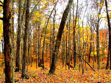 5. Cedar Forest Trail - 2 miles