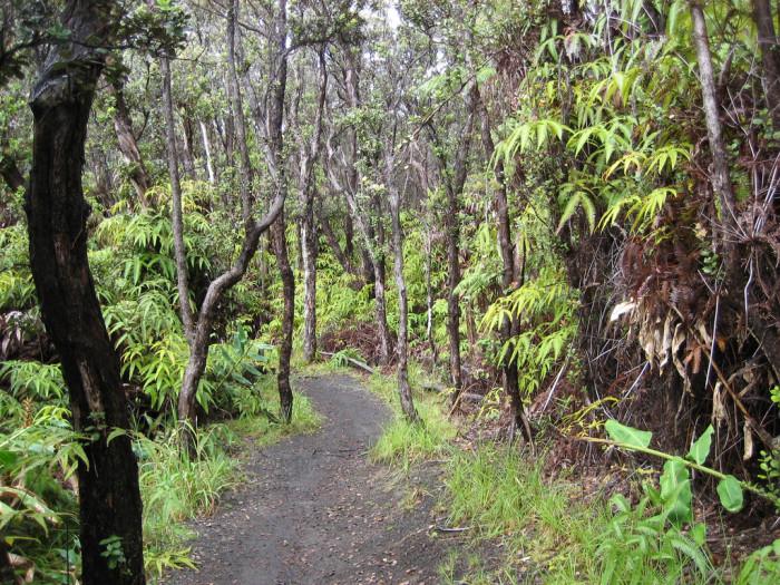 5. Kilauea Iki Trail