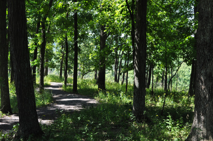 5.Shaw Nature Reserve