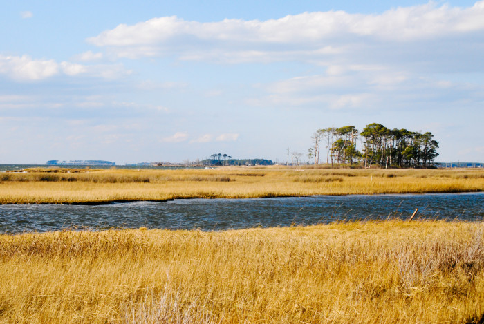 4. Maryland's many wetlands are home to hundreds of migratory birds and other wildlife.