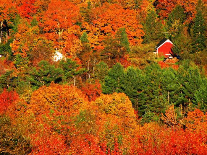 7.  Vermont foliage