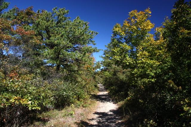 7. Blue Hills Reservation, Tucker Hill Loop,
