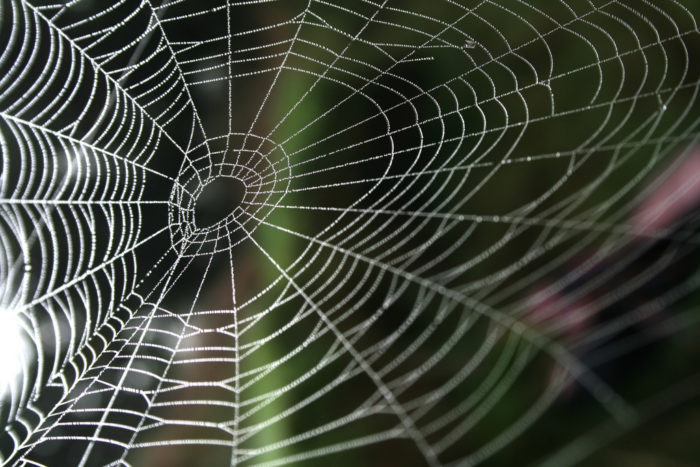 1.  What a tangled web we weave.