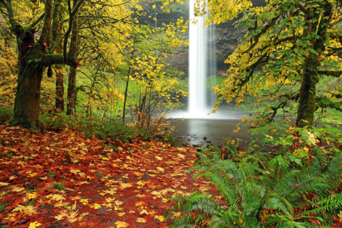 9. Silver Falls State Park