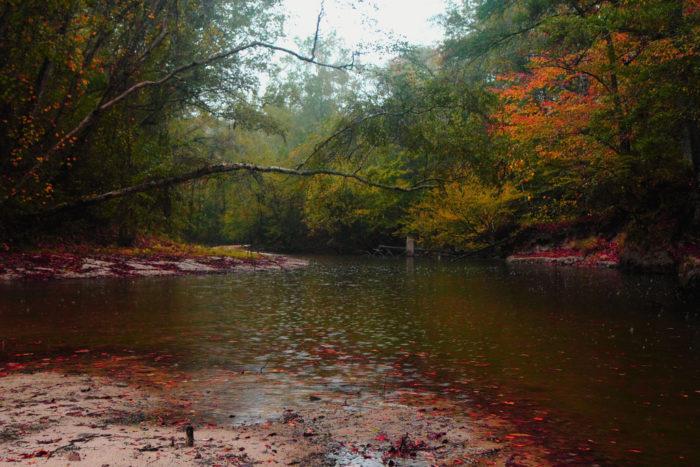 2. Sugar Cane National Recreation Trail, Kisatchie National Forest, Caney Ranger District