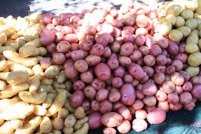 9. The potato has a long history in New Hampshire.