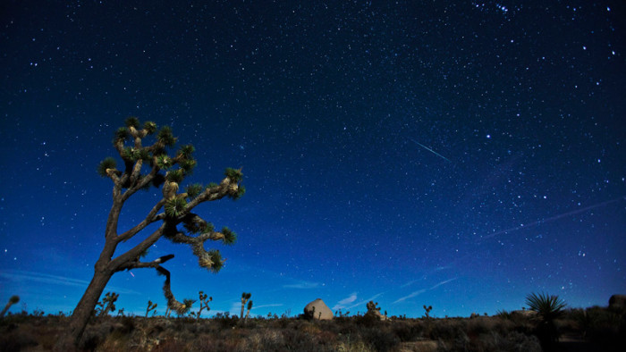 8. The night sky in Joshua Tree makes it look like we're on another planet.