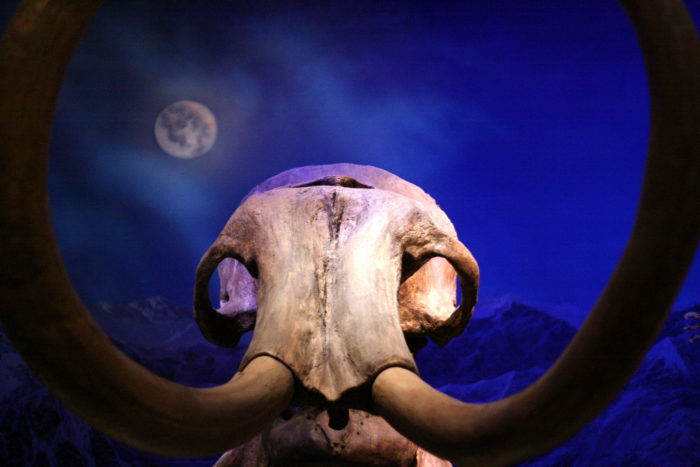 1. There are several incredibly old mammoth butchering sites in southern Arizona.