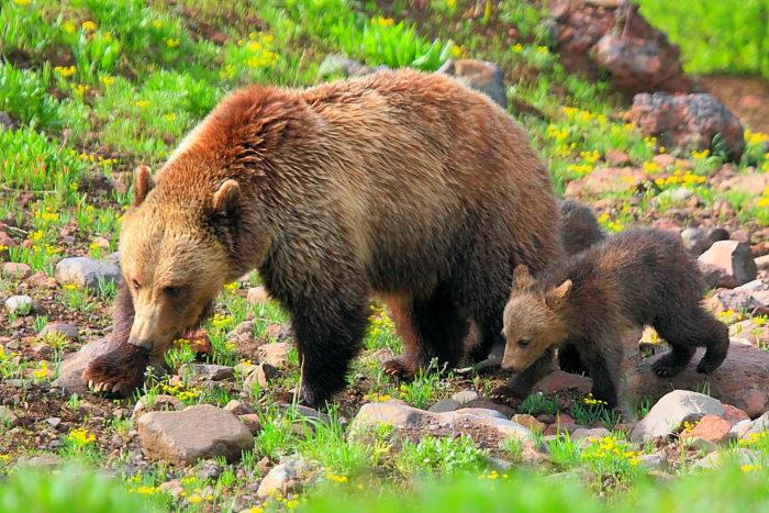 3. Bears