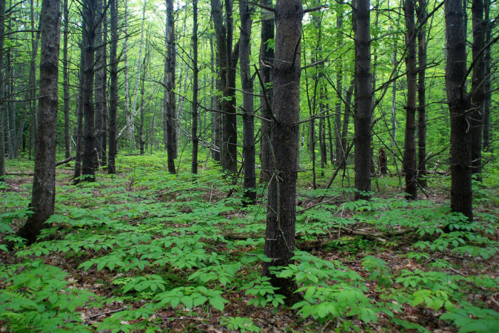 15. To the thick, green forest.