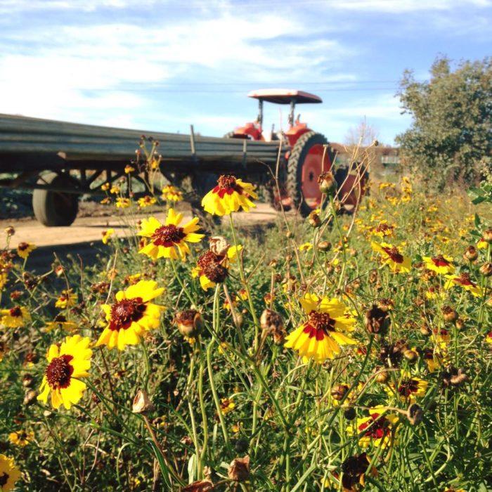 3. McGrath Family Farm in Camarillo