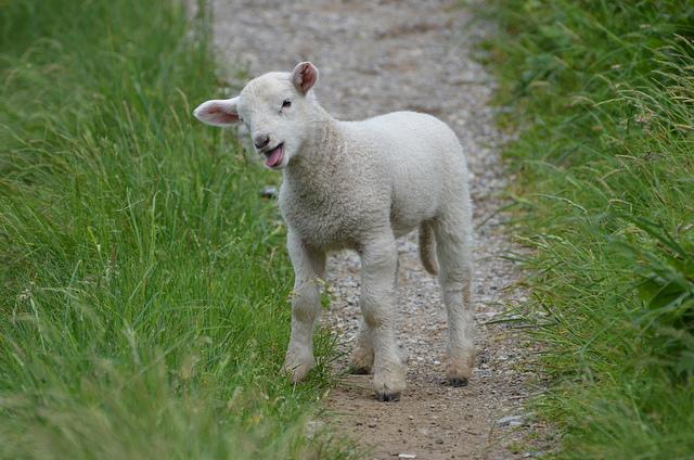 "10. Newport resident Sarah Josepha Hale wrote ""Mary Had a Little Lamb."""