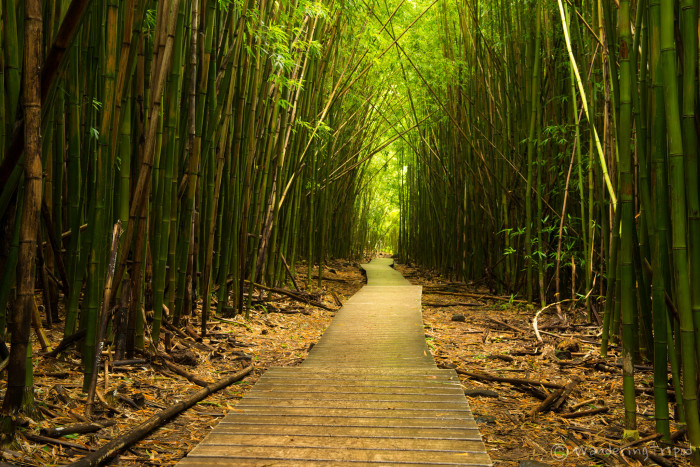 After you have basked in the beauty that is Makahiku Falls, you will enter a bamboo forest that is sure to take your breath away.