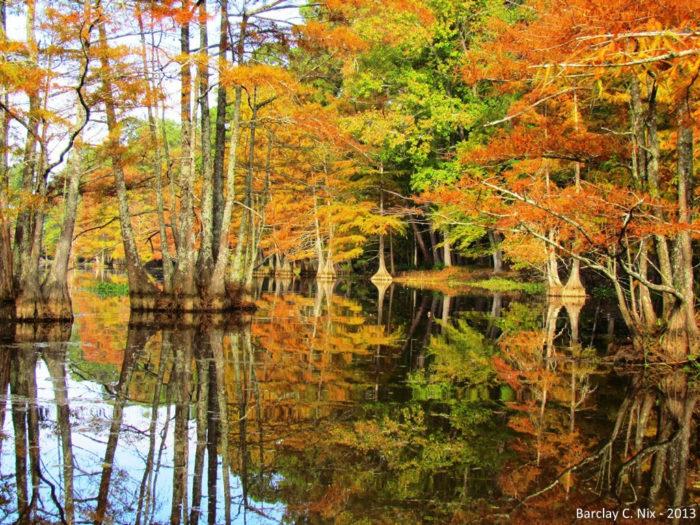 6. Tree Identification Trail - .3 miles