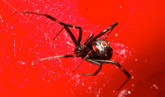 5. Black Widow