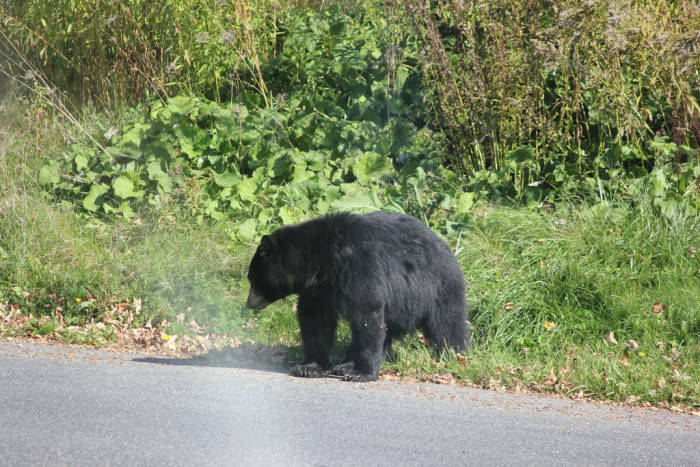 5.Do bears really go after your food?