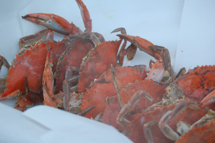 4. Our hands have been cut up dozens of times from picking crabs, but it's so worth it.
