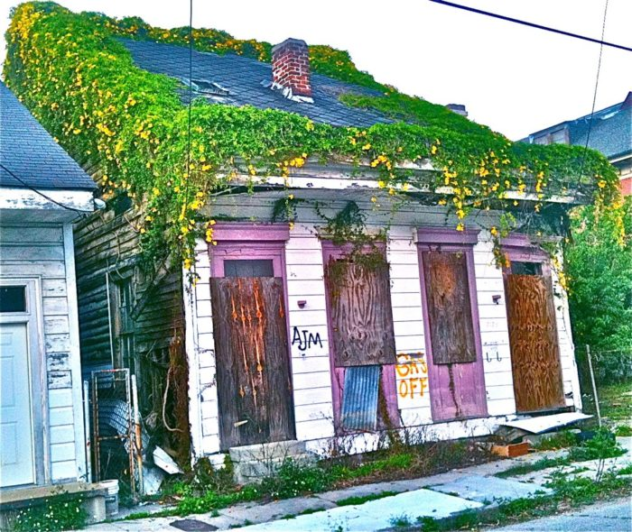 7) Cats Claw on Old Creole Home