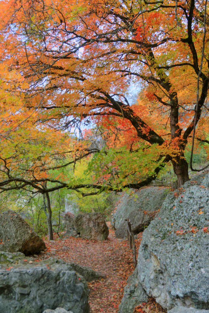 10. The way our trees evolve into vibrant works of art in the fall is breathtaking.