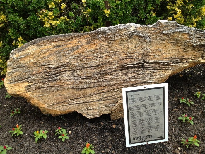 6. Petrified Forest, Flora