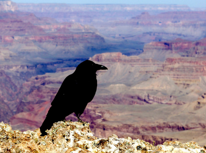 9. There have been approximately 770 deaths that have happened since the 1870s as a result of visiting the Grand Canyon.