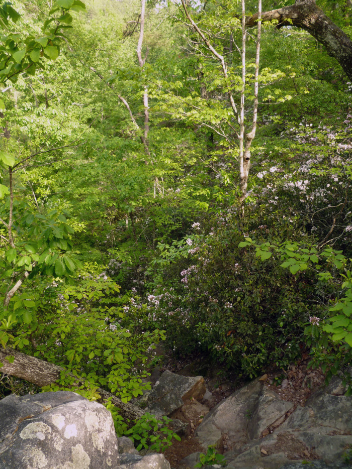 5. Oak Mountain State Park/Peavine Falls Trail - 1.9 Miles