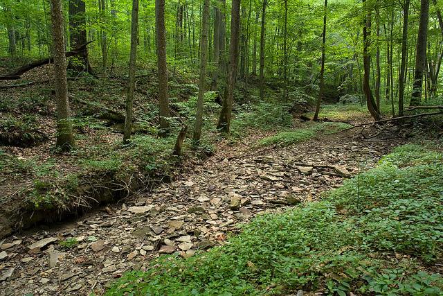 mccormick creek