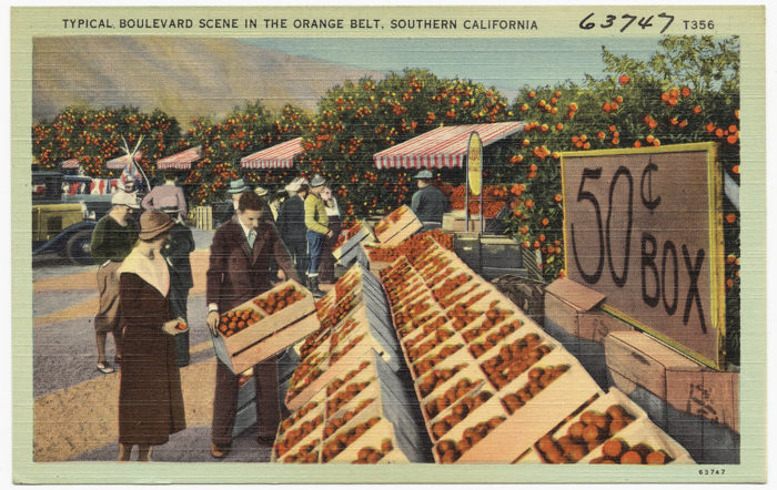 6. Just another day in SoCal surrounded by citrus trees and boxes of oranges for 50 cents.