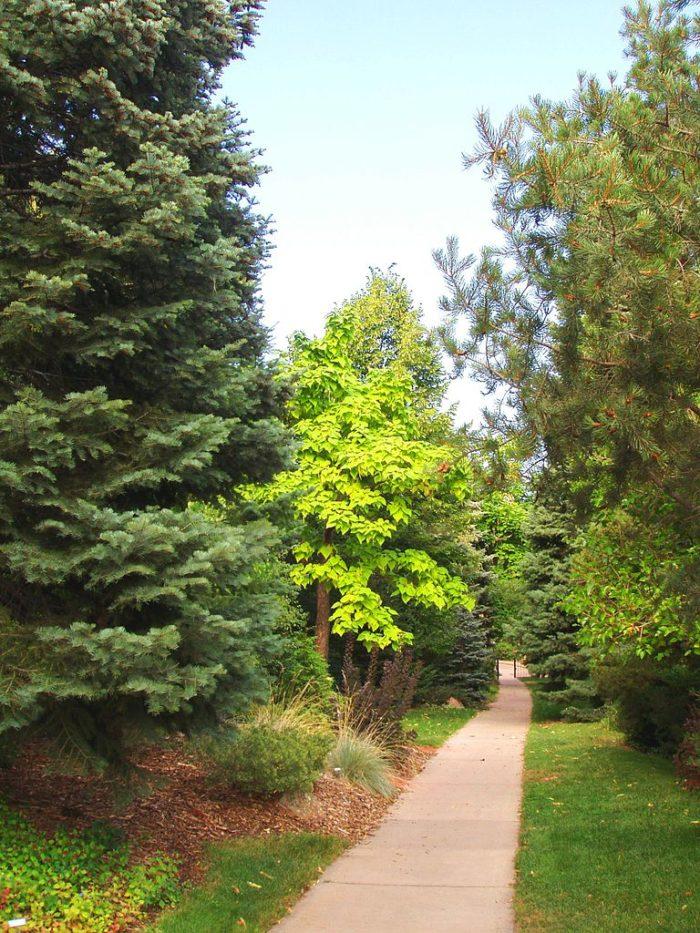 1. Andrews Arboretum (Boulder)
