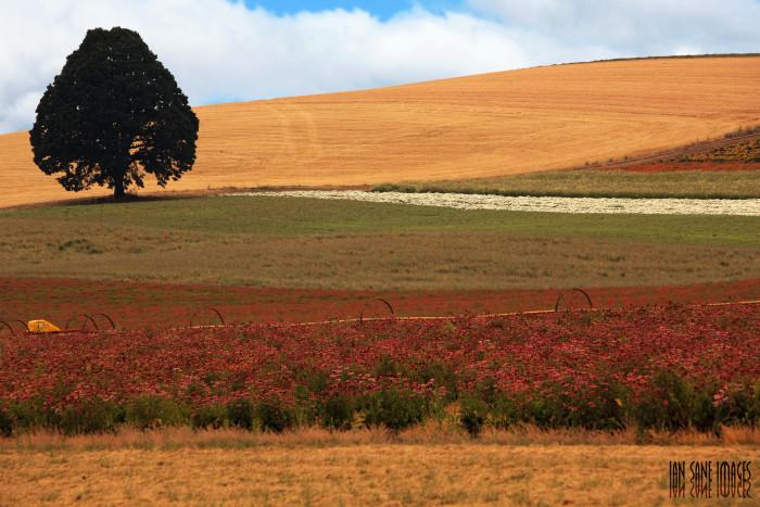 13. A beautiful shot of the rolling, bucolic countryside near Silverton.