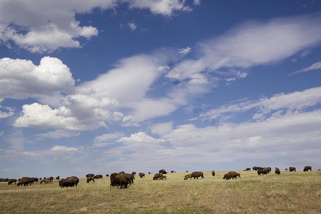 7. Take a South Dakota road trip.