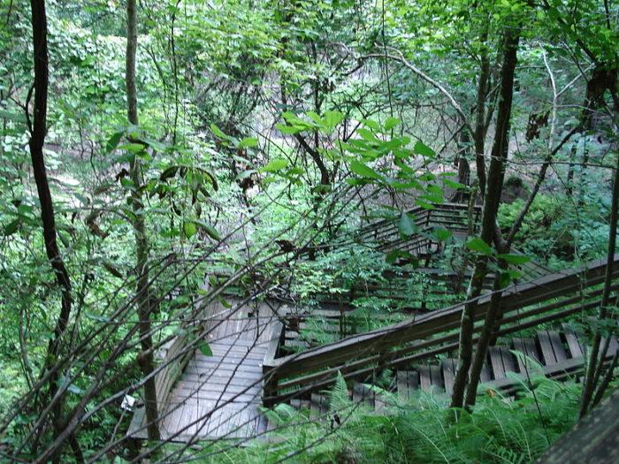 10. Devil's Millhopper Geological State Park, Gainesville